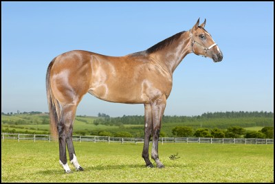 YVORY VISTA (Yvory James x Jumpstart Jess, por Mr. Jess Perry) - Lote 1 Leilão Vista Verde 2016